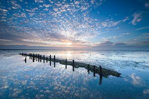 Kleurexplosie bij Wierum, Nederlandse wadden kust
