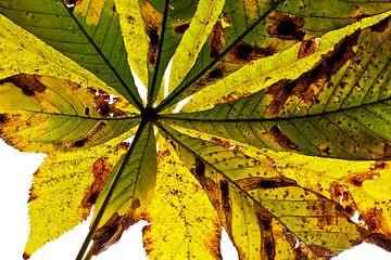 Herfstbladeren 5 van Henk Leijen