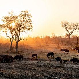 De zonsondergang in de Afrikaanse wildparken van Ineke Huizing