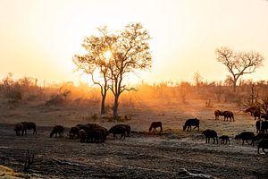 De zonsondergang in de Afrikaanse wildparken van