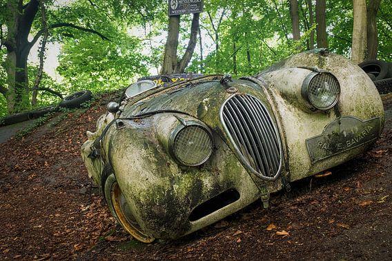 Jaguar in the Woods van Vincent den Hertog