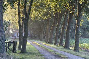 Landweggetje in de ochtend van Pauline Bergsma