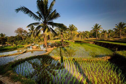 Rijstvelden op Lombok von Willem Vernes