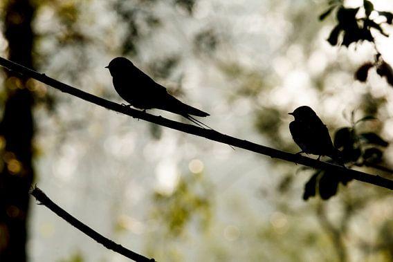 Zwaluwen in het ochtendlicht