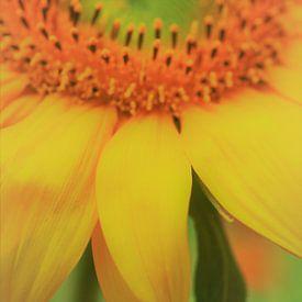 Sonnenblume van Falko Follert