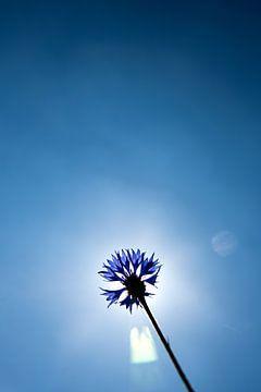 Blau von Eva Overbeeke