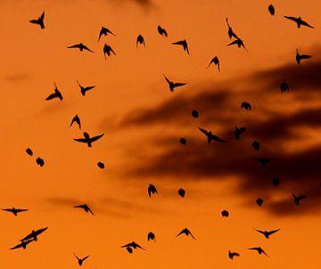 Birds sur Anne Koop