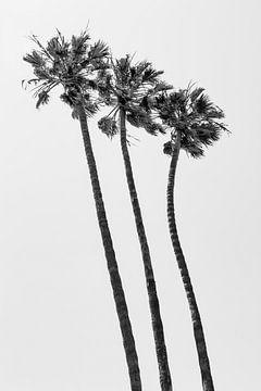 KALIFORNIEN Palmen am Strand | Monochrom von Melanie Viola