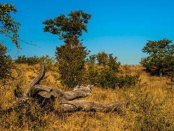 Afrikaans stuk hout van Rob Smit