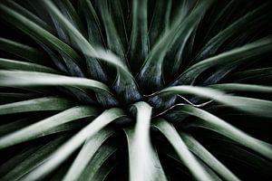 Palmengarten I