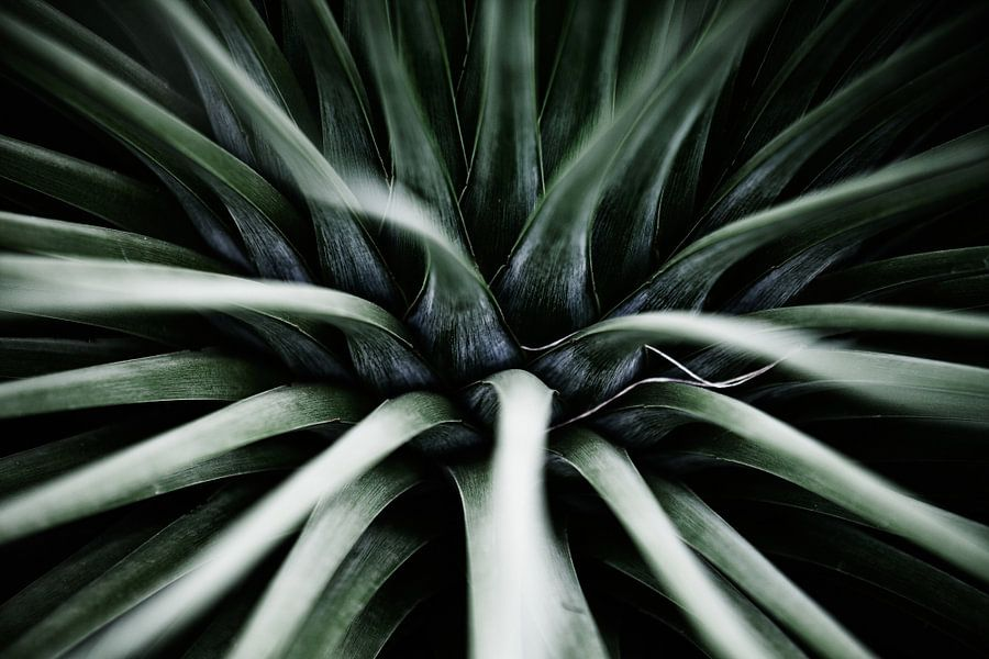 Palmengarten I van Insolitus Fotografie