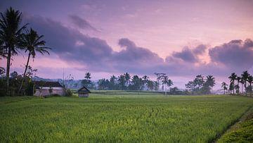 Zonsopkomst rijstveld landschap Indonesie  van Manon Ruitenberg