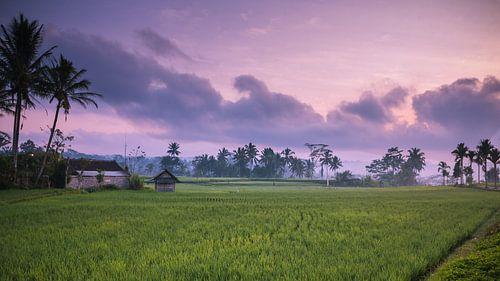 Zonsopkomst rijstveld landschap Indonesie