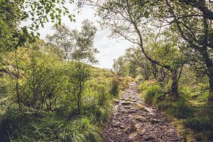 Waldweg in Schottland