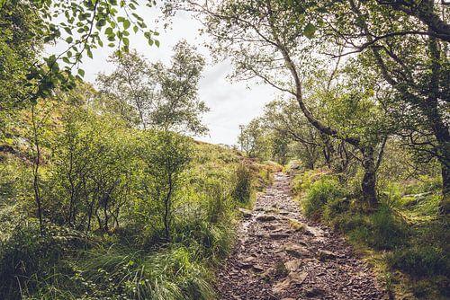 Bospad in Schotland