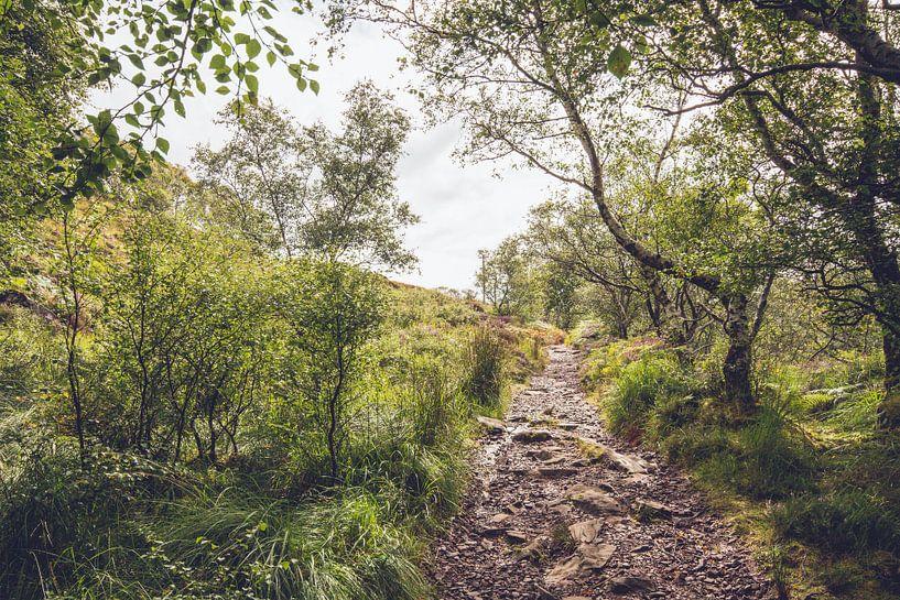 Waldweg in Schottland von Geke Woudstra