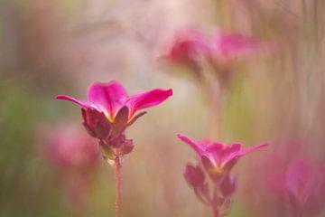 Vergeten bloemetjes van