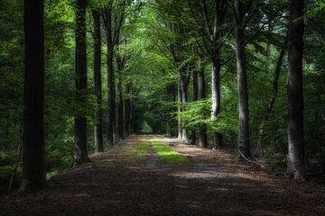 Wanderweg im Drongengoedbos. von jacky weckx