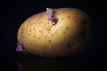 Die Kartoffel von Jan Brons