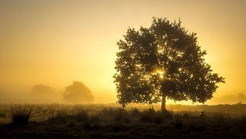 Gouden zonsopkomst van