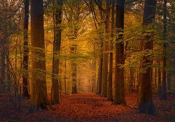 Farben des Herbstes von Wim van D