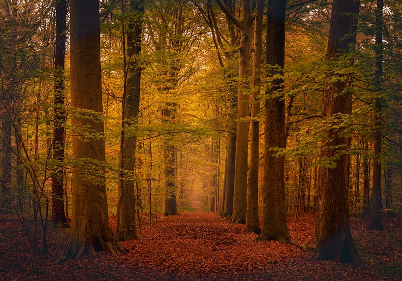 Colours of autumn van Wim van D