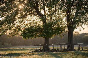 Kastanjebomen in avondlicht