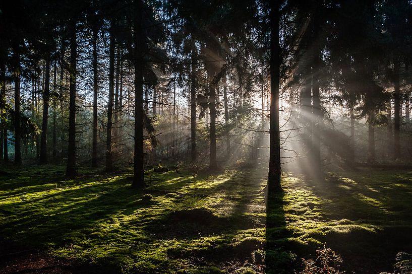 Zonsopkomst in het bos von John Verbruggen