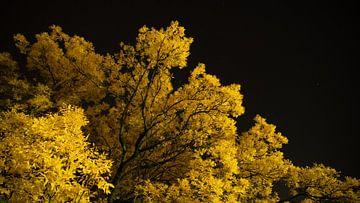 Schönster Baum in Kampen. von Bert Visser