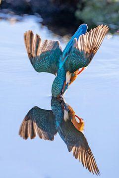 Eisvogel von Han Peper