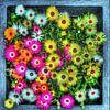 Digital Art Medium Bloemen van Hendrik-Jan Kornelis thumbnail
