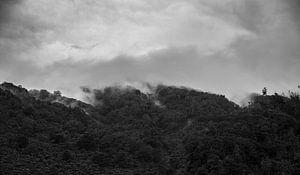 Wolkendek over Bos van