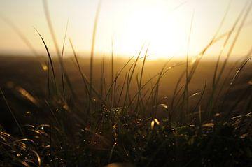 Duingras tegen zonsondergang aan de kust van Yvette Stevens