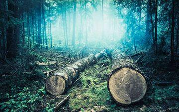 Mistige ochtend in het bos van TZPhotography