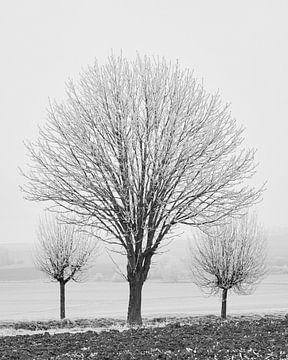 Winter-Ernte 3 von Keith Wilson Photography