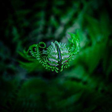UFO: Unidentified Flora Object van HvNunenfoto