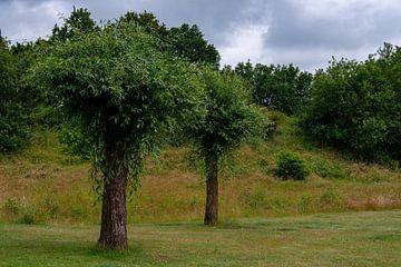 Zomer in Weert idyllisch in park Boshoven van JM de Jong-Jansen
