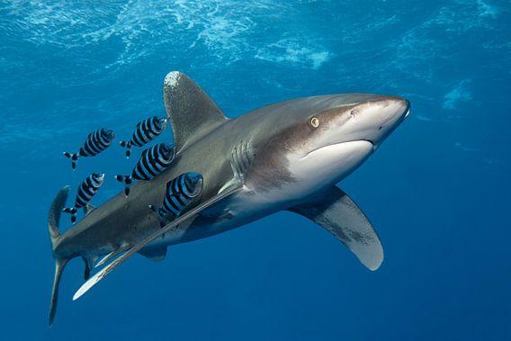 Shark on Speed van Norbert Probst