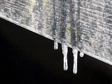 Vier kleine ijspegels in Park Sonsbeek te Arnhem van Petra Dielman