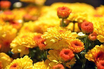 Gele, vrolijke bloemen von Alex van Damme