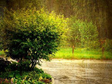 Sommerregen van Gabi Siebenhühner