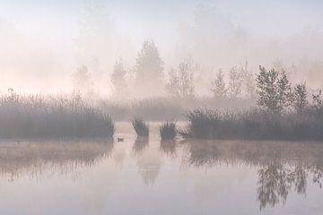 Mist landschap van Andy Luberti