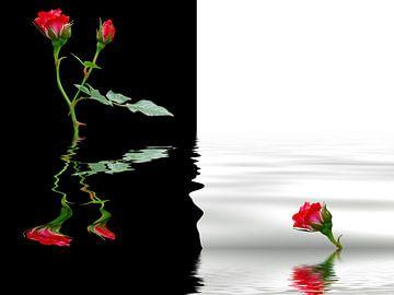Rote Rosen van Martina Fornal