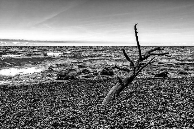 Bois flotté sur la plage sur Frank Herrmann