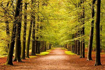 Beukenlaan in herfst bos (Utrechtse Heuvelrug, Nederland) van Sjaak den Breeje