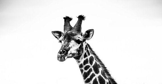 Giraffe in zwart en wit van Marit van de Klok