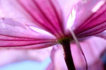 Fleur de lys rose von Christine GUILLET