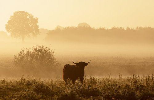 Rund in ochtendglore van Hans Koster
