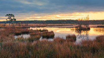 Zonsopkomst in het Nationaal Park Dwingelderveld