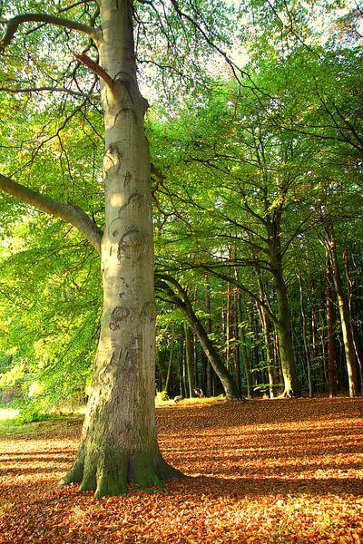 Oktoberbuche van Ostsee Bilder